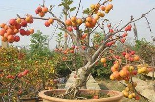果树什么时间嫁接比较好
