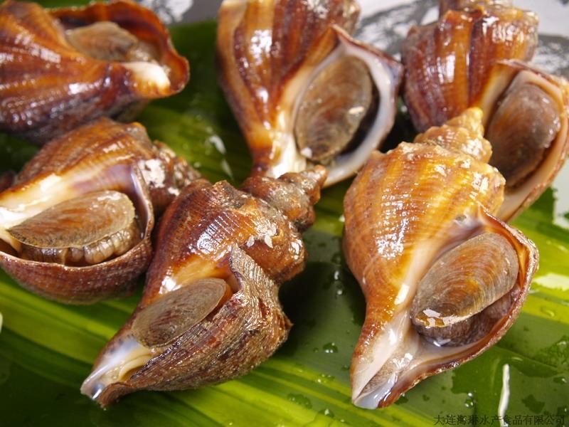 从北戴河买回的海螺干怎么吃-干海螺肉怎么吃