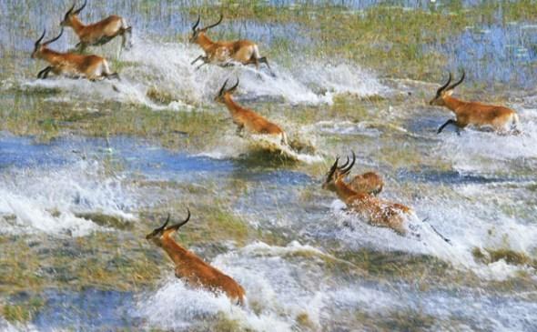 野生动物的绿洲   在干旱的沙漠中