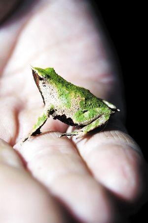 变态完成后再将小蛙从口中吐出