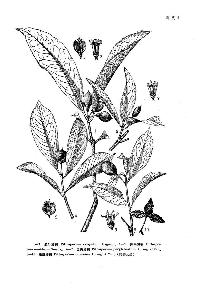 植物灌木手绘线稿