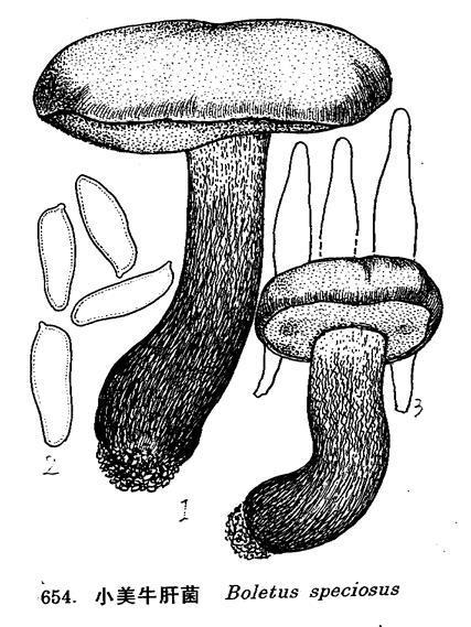伞菌子实体结构形态图