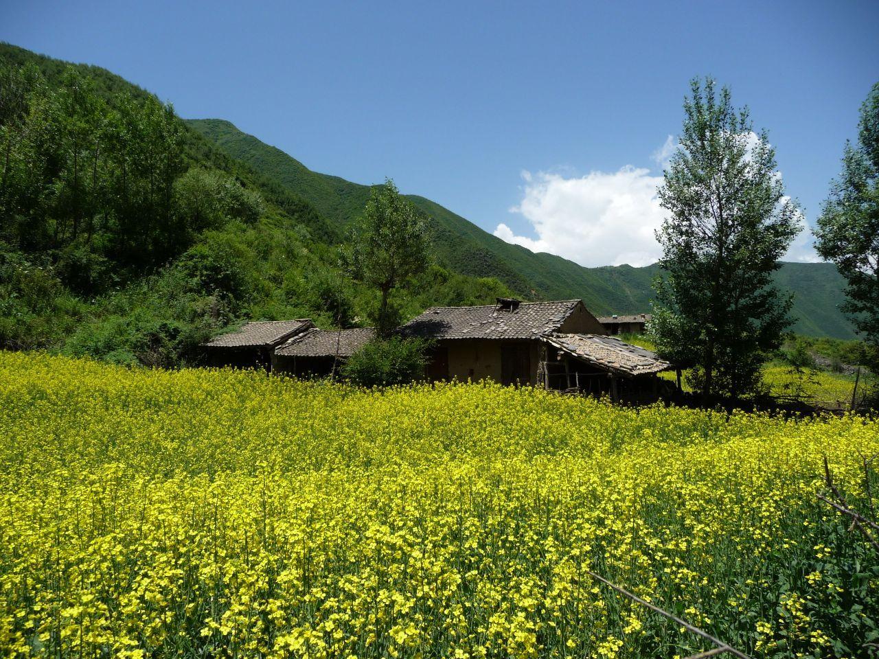 临夏农村改造房子图片