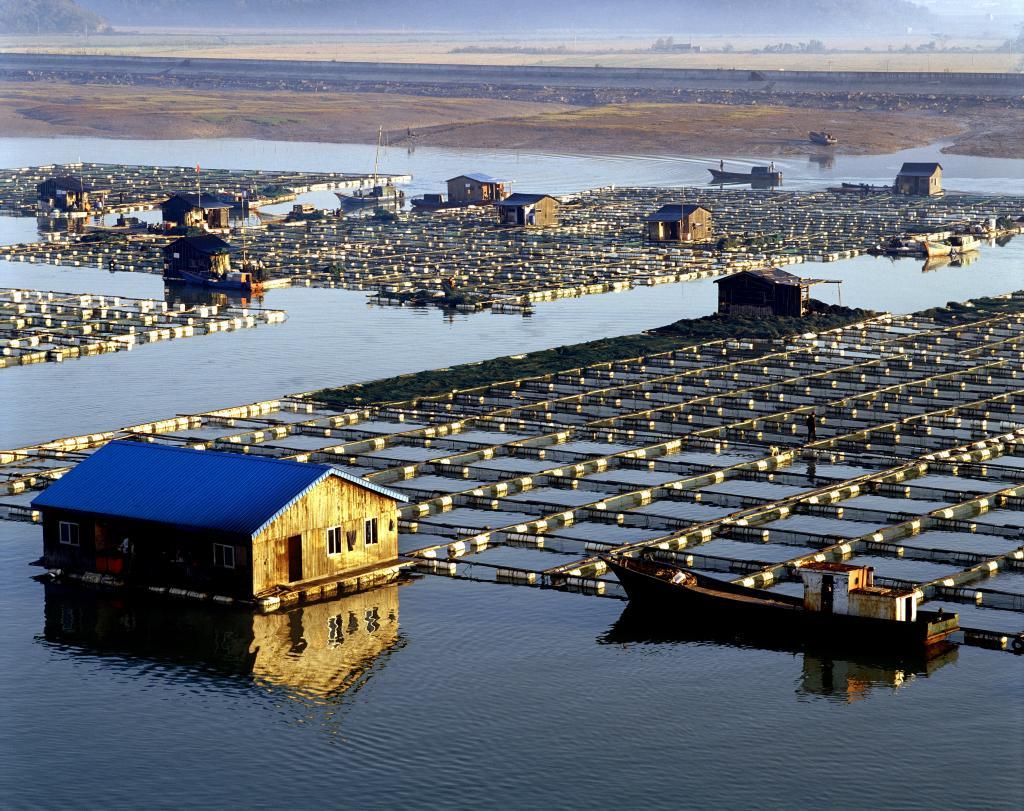悬山岛的西北海域为网箱养殖基地.