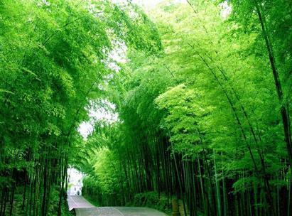星星竹海风景区地处湖北省咸宁温泉