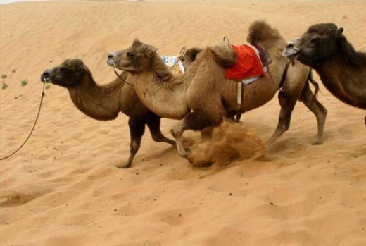 安南坝野骆驼自然保护区