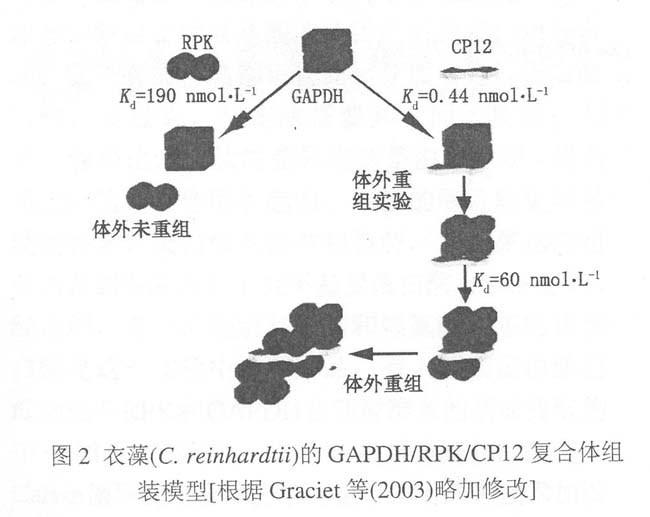 植物叶绿体的基本结构和功能