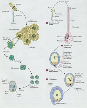 动物细胞植物细胞细菌结构图
