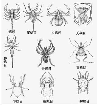 手绘金属组成的动物