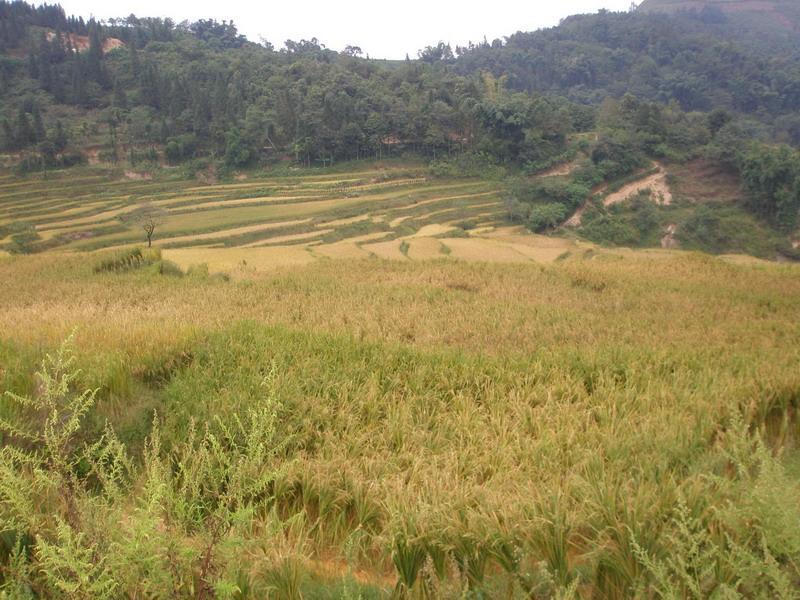 农民种稻田简笔画