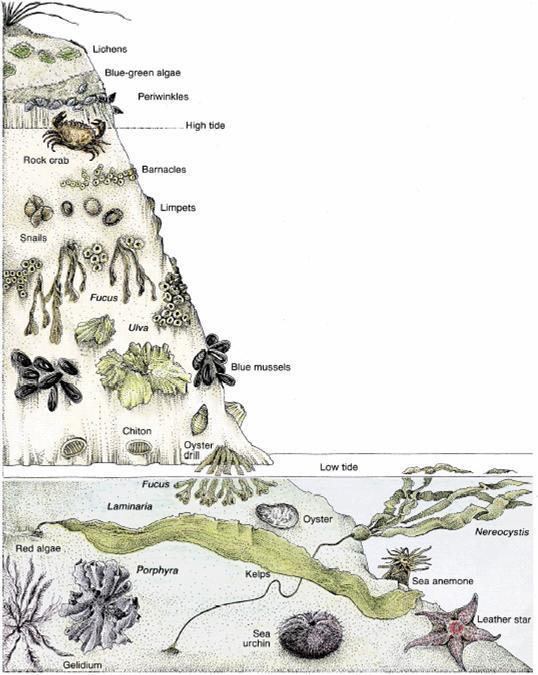 海洋地质学_360百科