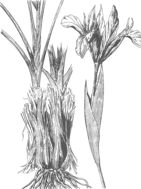 手绘植物线稿群落