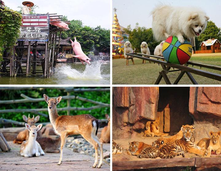 顺德长鹿农庄童话动物王国突破了世界传统动物园